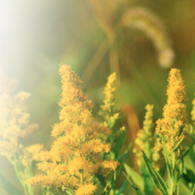 Find Relief From Seasonal Allergies @MinuteClinic @CVS_Extra #Ad