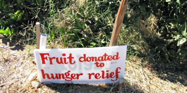 Best Way To Volunteer This Holiday Season