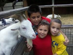 Wordless Wednesday-Bronx Zoo