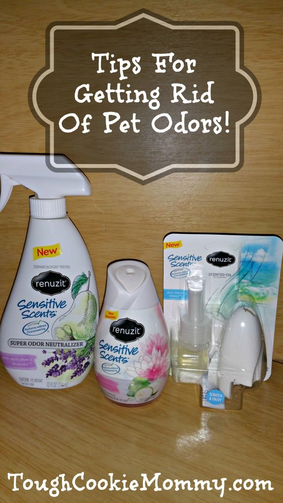 tips for getting rid of pet odors renuzit